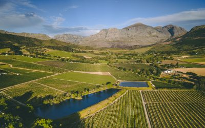 How to export wine from South Africa