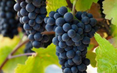 Top 5 Pinot Noir Wine Awards Winners Announced